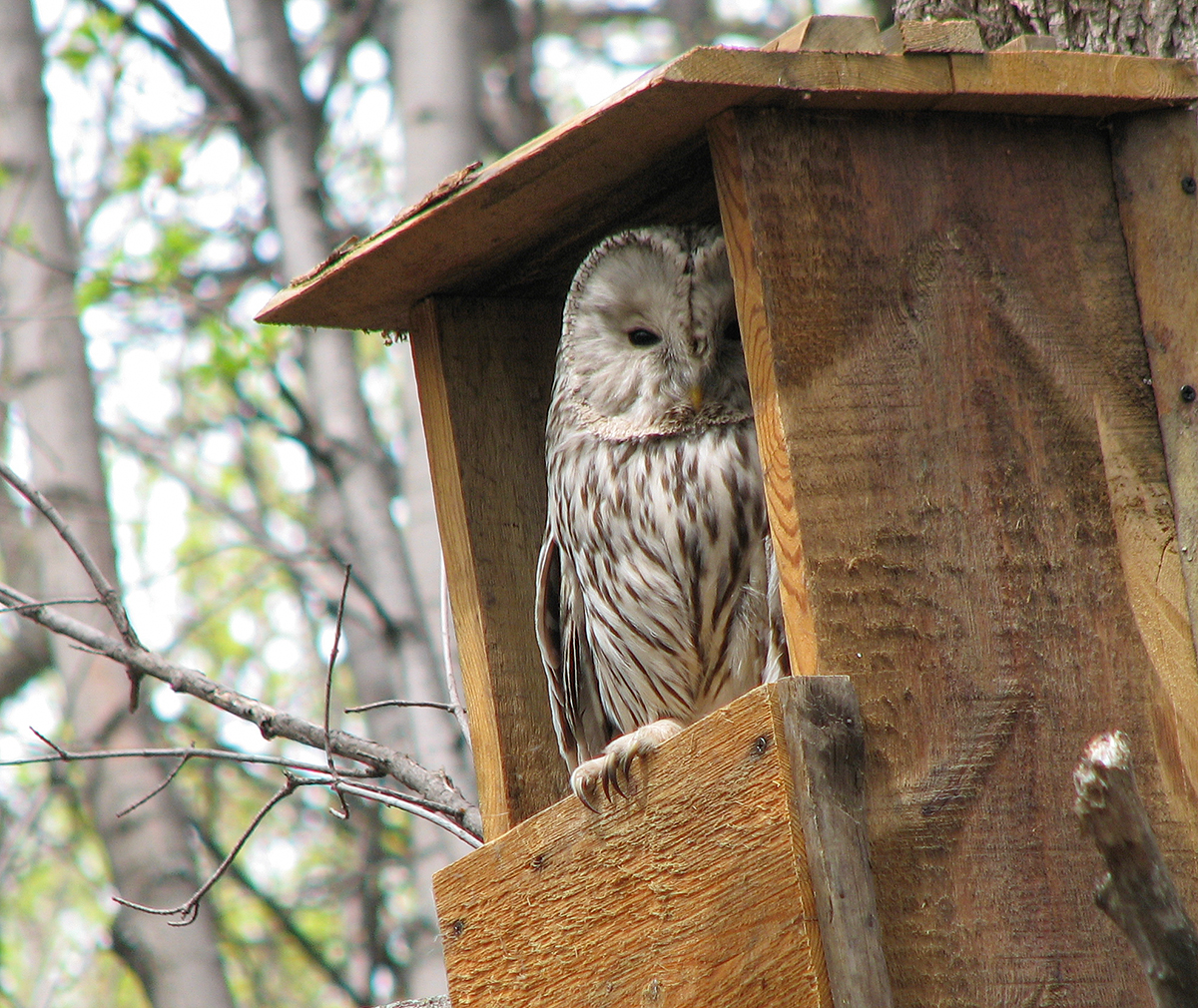 birdwatchingapp/images/about_us/owl_in_birdhome.jpg